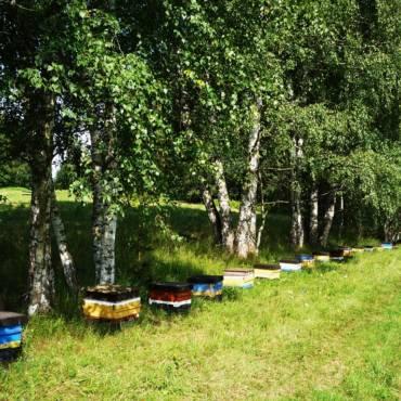 Warum sind Carnica Cimala Bienenköniginnen anders?