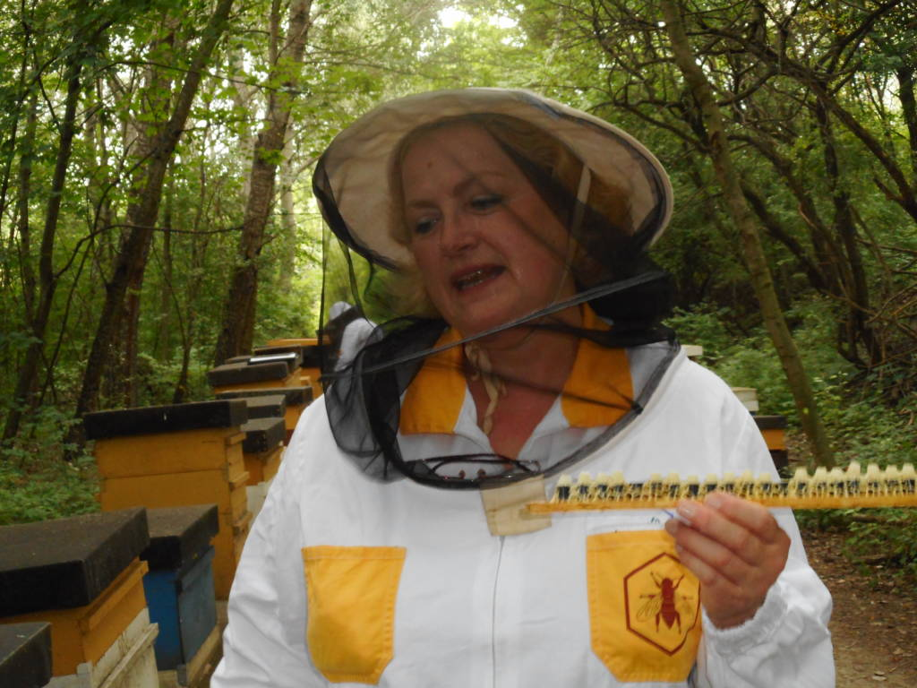 Lenka displays a row of queen bee cells