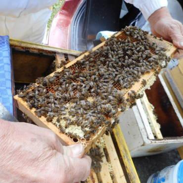 Einschließen der Bienenkönigin und Vorbereitung für den Versand