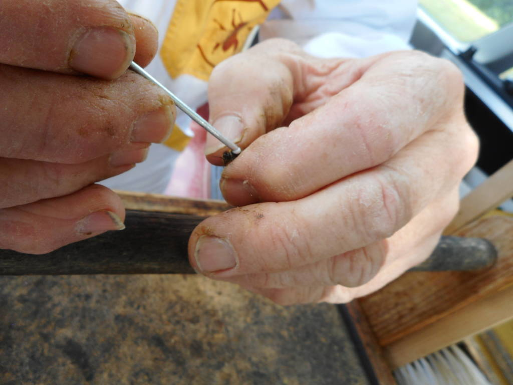 An individual tracking number is applied to each queen with adhesive glue.